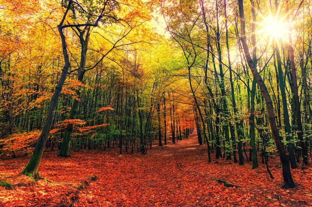 October Nature